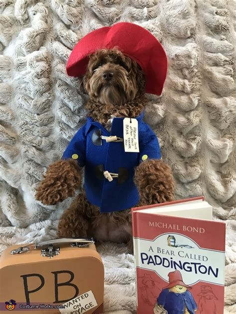 paddington bear dog costume