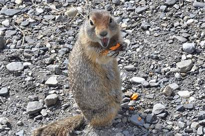 Squirrel Eating Fruit Lh6 Googleusercontent