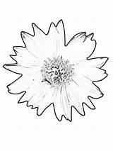 Coloring Pages Sunflower Printable Gogh Van Flowers Sheets Print Sunflowers Flower Colouring Petals Printing Bestcoloringpagesforkids Teenagers Duathlongijon sketch template