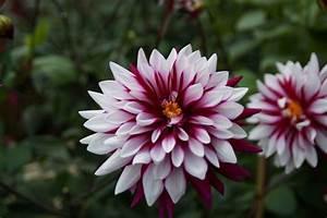 Blumen Bewässern Mit Wollfaden : blumen richtig fotografieren tipps f r sch ne pflanzenfotos ~ Lizthompson.info Haus und Dekorationen