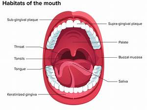 By Studying Mouth Bacteria  Scientists Hope To Learn The