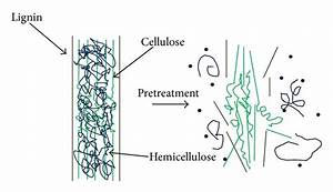 Deconstruction of lignocelluloses into cellulose ...