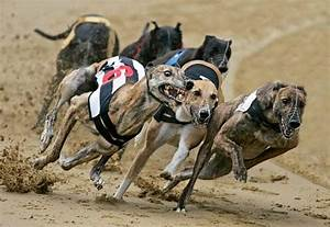 Expired £49m loan unleashes doubts over dog-race group ...