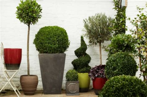 35 plants pictures flowering houseplants fresh design