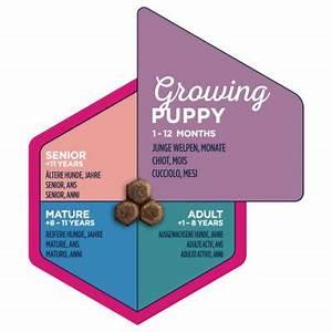 Eukanuba Small Breed Puppy Food Buy Now At Bitiba