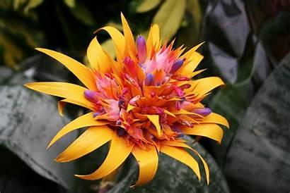 Flowers Exotic Tropical Hawaiian Flower Plants Names