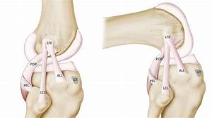 Brain Post  New Ligament Found In Human Knee