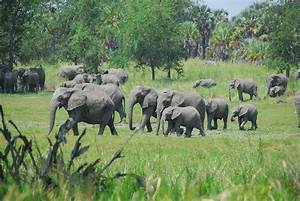 Kakum National Park • PlaceRating