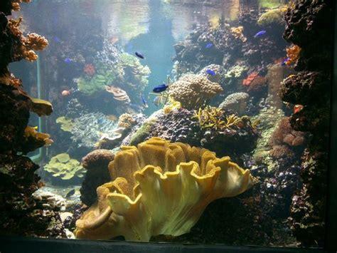 Aquarium  Picture Of Zoologischer Garten (berlin Zoo