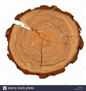 Annual Tree Growth Rings With Brown Tones Drawing Of The