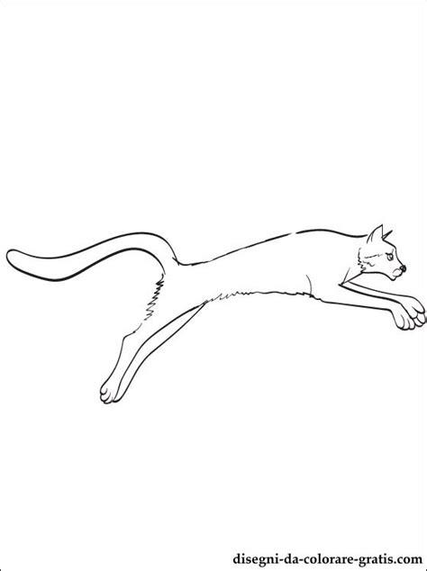 ghepardo disegni da colorare disegni da colorare gratis