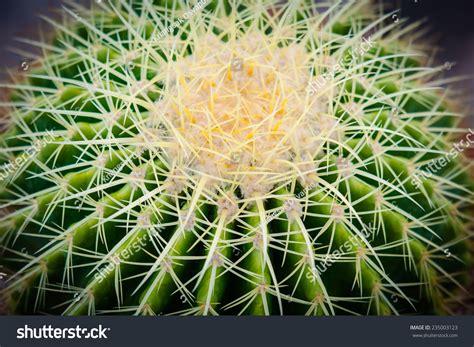 Macro Top Of Cactus , Thailand Stock Photo 235003123 ...