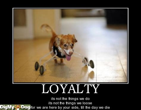 quotes  dogs loyalty quotesgram