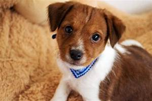 Brown And White Mutt Dog | www.pixshark.com - Images ...