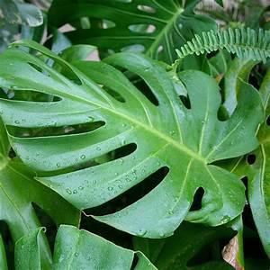 Plante Tropicale D Intérieur : plante grimpante d 39 int rieur liste ooreka ~ Melissatoandfro.com Idées de Décoration