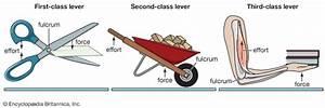 lever - Students | Britannica Kids | Homework Help