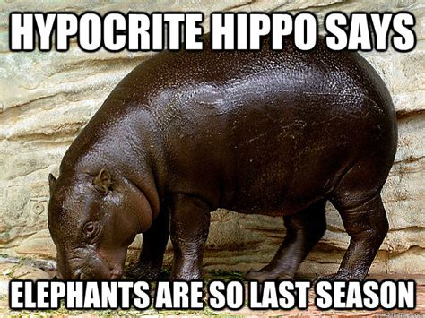 Baby Hippo Meme - hypocrite hippo memes quickmeme