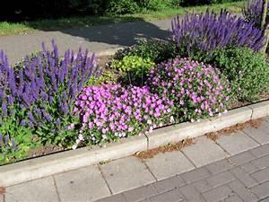 Heimische Pflanzen Für Den Garten : gartenabgrenzung mit pflanzen ~ Michelbontemps.com Haus und Dekorationen