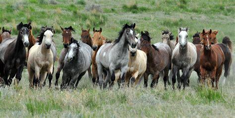 texas horse equine industry horses study impact copy economic eleanor credit