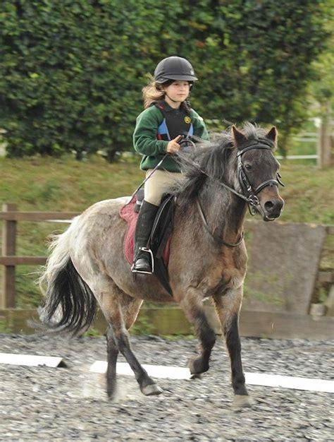 horse riding  children childrens horse riding lessons