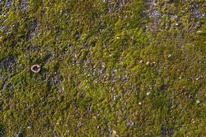 Moos Auf Gartenplatten Entfernen : moos auf waschbetonplatten file moos auf wikipedia moos vom dach entfernen wirkungsvolle ~ Michelbontemps.com Haus und Dekorationen