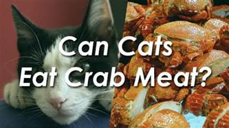 can cats eat chicken can cats eat cheetos pet consider