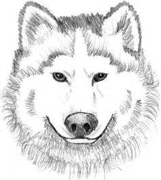 Related Suggestions for Realistic Coloring Pages Of Wolves