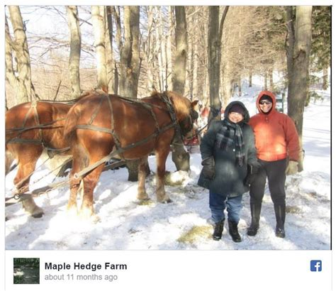 sleigh rides ny upstate newyorkupstate places fabius horse through