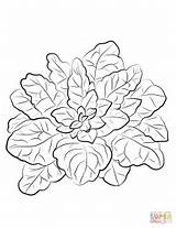 Spinach Coloring Pages Printable Veggies Drawing Supercoloring Categories sketch template