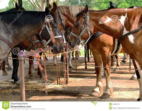 corral golden tied standing horses facing each sun different rope lit rail stallion