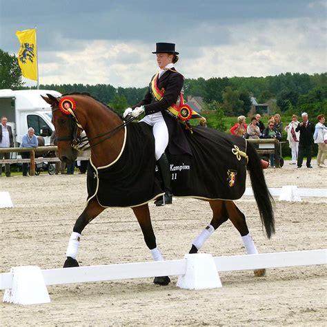 medium dressage advanced horses horse dominie dumbleton brittany