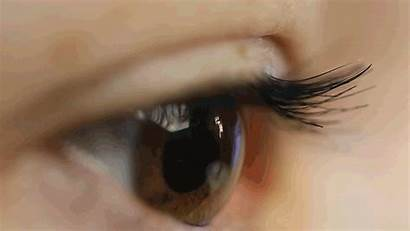 Observe Wellesley Study Looking Around Eyeball Mates