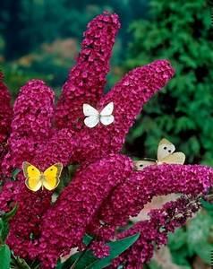 Welche Blumen Für Bienen : 17 blumen und pflanzen die schmetterlinge im garten magisch anziehen ~ Eleganceandgraceweddings.com Haus und Dekorationen