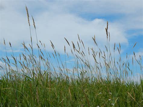 Free photo: Prairie, Tall Grass, Sky   Free Image on Pixabay   873906