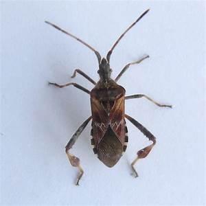 Kakerlaken ähnliche Insekten : wer kennt dieses insekt kakerlake tiere insekten ~ Articles-book.com Haus und Dekorationen