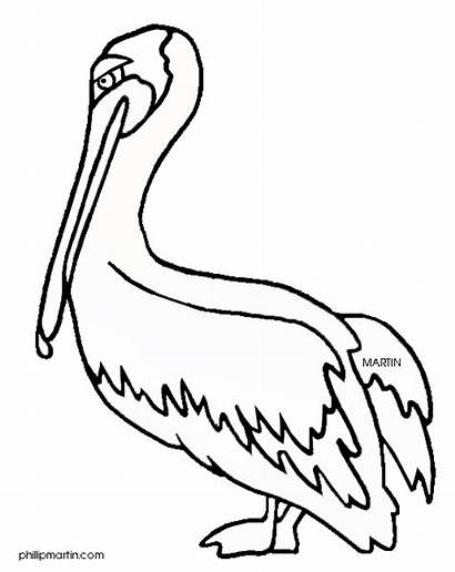 Louisiana Bird Clipart Pelican Drawing State Clip