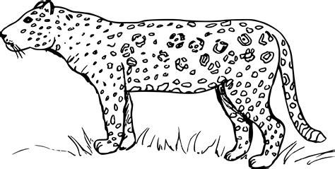Coloriage Jaguar à Imprimer