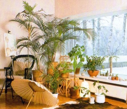 Indoor Windowsill Flowers by Indoor Plants For A South Facing Window Houseplants