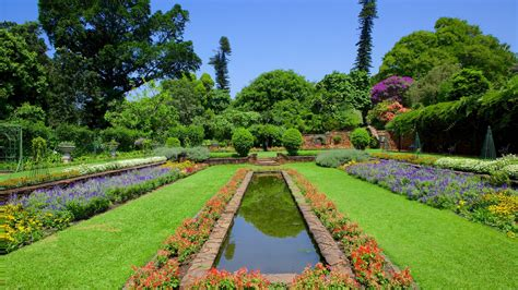 Botanischer Garten Durban by Flowers Pictures View Images Of Africa And Indian