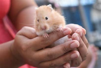 Hamster Pet Care Ultimate Dr Child Marie