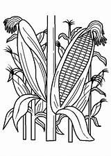 Plantation Coloring Pilgrims Indians Thanksgiving Coloriage sketch template