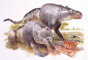 Andrewsarchus U2014 The World U0026 39 S Largest Predatory Mammal