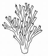 Seaweed Drawing Coloring Printable Pages Getdrawings sketch template