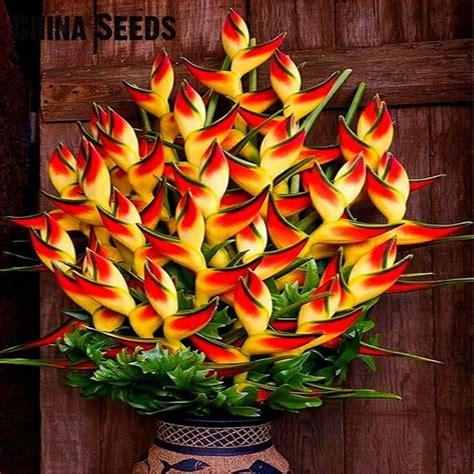 strelitzia reginae in vaso indoor pianta in vaso semi di uccello paradiso