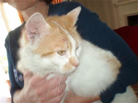 bienen niedrigere klassifizierungen marder gegen katze wk 0051 ultrasonic gegen marder hund katze problem mit marder katzen seite