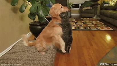 Hug Cat Dog Funny Meme Lol Memes
