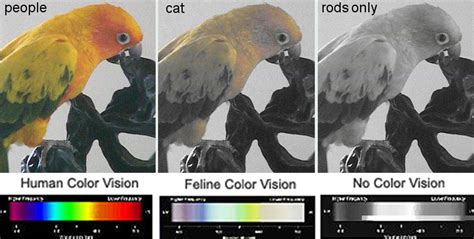 do cats see in color how do cats see gpfunfacts