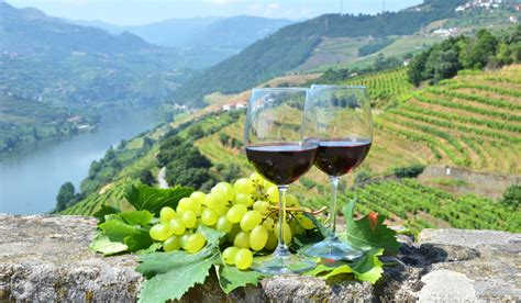 from lisbon to porto by 5 day trip wine tour to porto and douro valley from