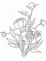 Coloring Peony Flower Pages Flowers Drawing Line Printable Sketch Template Mycoloring sketch template