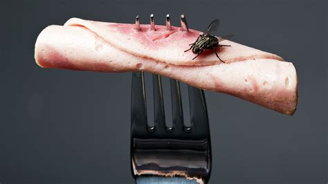 fly cuisines should you throw away food once a fly has landed on it